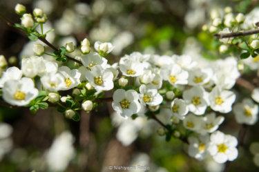 市沢・仏向の谷戸は春の花盛り。