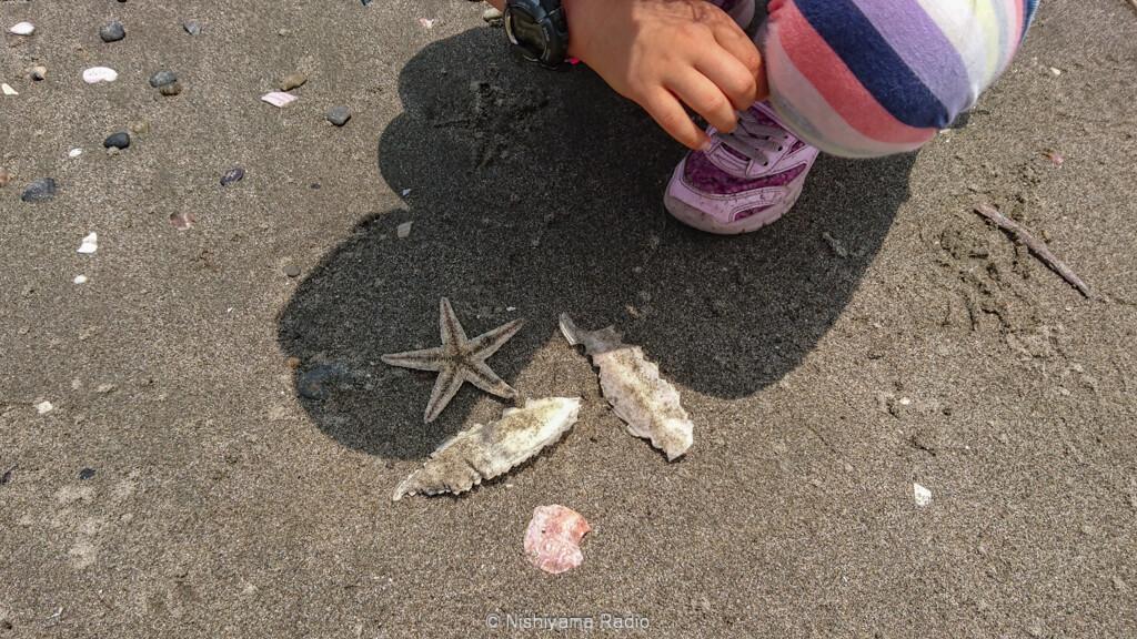 ヒトデと貝殻とイカの甲羅