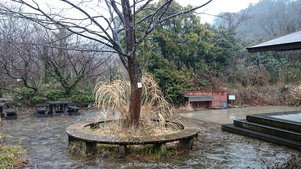 雨に濡れる自然観察センター前広場