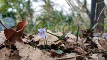 市沢・仏向の谷戸に春到来。