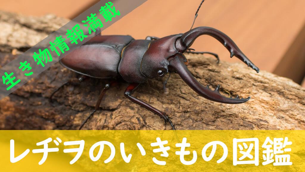 生き物情報が満載のWEB図鑑「レヂヲのいきもの図鑑」を見に行く!
