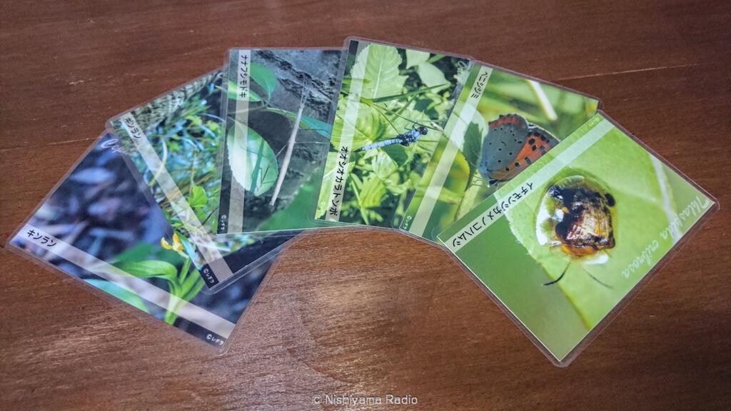 レヂヲ謹製生き物カード